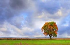Ensamt träd i höst Arkivbilder