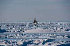 Ensamt träd i isen Fotografering för Bildbyråer