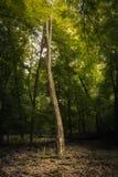 Ensamt träd i ljus Royaltyfri Foto