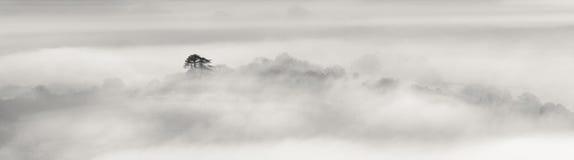 Ensamt träd i mist, på en kall December morgon arkivbilder
