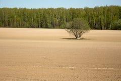 Ensamt träd i mitt av det plogade fältet Arkivbilder
