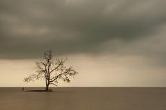 Ensamt träd i mitt av havet, lång exponering under sunse Arkivbild