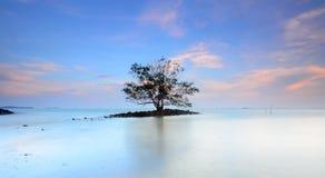 Ensamt träd i mitt av havet under solnedgång Arkivfoto