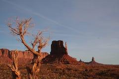 Ensamt träd i monumentdalen arkivfoto