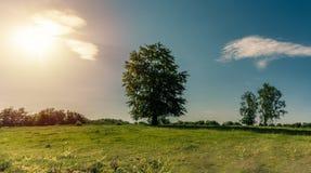 Ensamt träd i morgonen på sommar arkivfoto