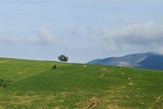Ensamt träd i Rif berg, Marocko royaltyfria bilder