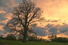 Ensamt träd i solnedgång Fotografering för Bildbyråer