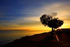 Ensamt träd i soluppgång Arkivbilder