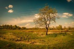 Ensamt träd i sommarfält royaltyfri bild