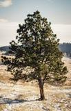Ensamt träd i South Dakota royaltyfri bild