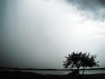 Ensamt träd i stormen Arkivfoton