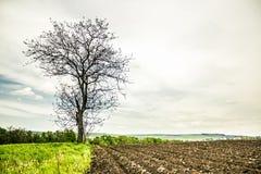 Ensamt träd i värmen Arkivfoto