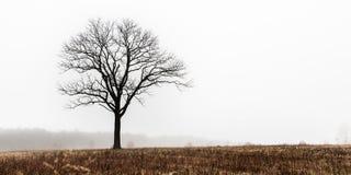 Ensamt träd i vinteräng Royaltyfria Bilder