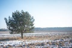 Ensamt träd i vinterladscape Royaltyfri Foto