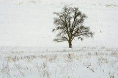 Ensamt träd i vinterlandet Arkivfoton