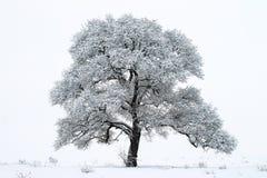 Ensamt träd i vinterlandskapet arkivfoto