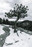 Ensamt träd i Winterscape Arkivbilder