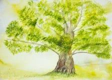 Ensamt träd med den stora stammen Arkivfoto