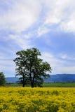 Ensamt träd med gula ängblommor arkivbild