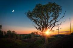 Ensamt träd med månen på solnedgången Arkivfoto