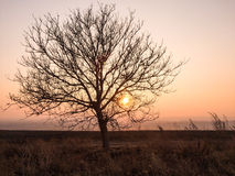 Ensamt träd mot solnedgånghimmel Fotografering för Bildbyråer