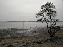 Ensamt träd nära stranden efter den tidvattens- strömmen, Hadyai, Songkhla, Thailand Royaltyfri Foto