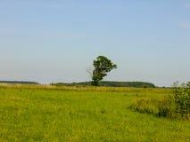 Ensamt träd någonstans i Litauen Arkivfoto