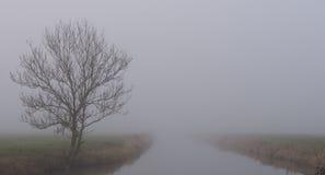 Ensamt träd och flod som döljas i dimma Arkivfoto