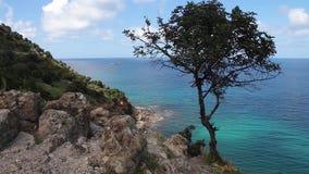 Ensamt träd och hav på den Akamas halvön Cypern lager videofilmer