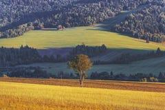 Ensamt träd och kultiverat fält royaltyfria foton