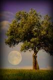 Ensamt träd och måne Royaltyfri Fotografi