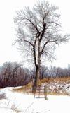 Ensamt träd och port i kanadensiska skogsmarker royaltyfri foto