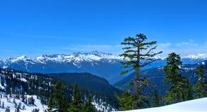 Ensamt träd och snowcapped berg Douglas Fur träd på den poupular slingan till älv- sjöar nära Vancouver och Squamish Britt C arkivfoto