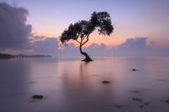 Ensamt träd och soluppgången, Chumphon, Thailand arkivbild