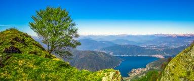 Ensamt träd ovanför den Lugano staden Sikt till schweiziska fjällängar från Monte Lema, kanton Ticino, Schweiz, Europa royaltyfri fotografi