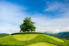 Ensamt träd på överkanten av en kulle royaltyfria foton