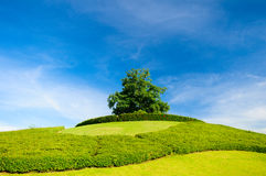 Ensamt träd på överkanten av en kulle arkivbild