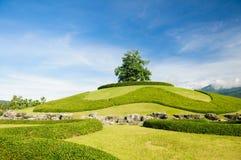 Ensamt träd på överkanten av en kulle royaltyfria bilder