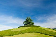 Ensamt träd på överkanten av en kulle arkivbilder