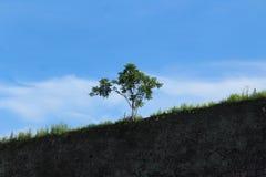 Ensamt träd på överkanten av golcondafortet i hyderabad arkivfoto