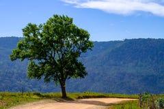 Ensamt träd på berget med blå himmel Arkivfoton