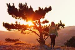 Ensamt träd på berget och kvinnan som bara går till solnedgången bak sikt royaltyfria bilder