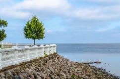Ensamt träd på den steniga kusten av havet Fotografering för Bildbyråer