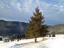 Ensamt träd på det snöig berget arkivfoto