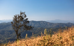 Ensamt träd på det tropiska berget Arkivbilder