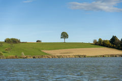 Ensamt träd på en äng nära sjön Arkivfoton