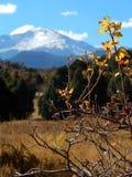 Ensamt träd på en bakgrund av berg Arkivfoto