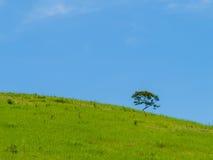 Ensamt träd på en kulle och himlen i bakgrunden arkivbild