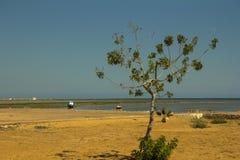 Ensamt träd på en kust Arkivfoton