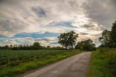 Ensamt träd på en landsväg Royaltyfri Bild